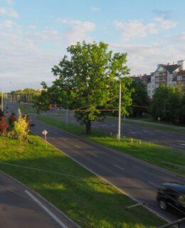 Lubelski kandydat na Drzewo Roku 2021 - dąb przy ul. Bohaterów Monte Cassino